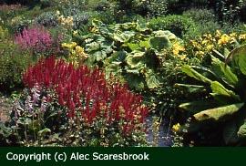 Impressive bog garden