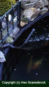 Copyright (c) Alec Scaresbrook. DIY venturi in Koi pond.